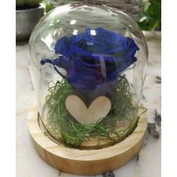 Forever Rose, blue, in 17cm glass bell