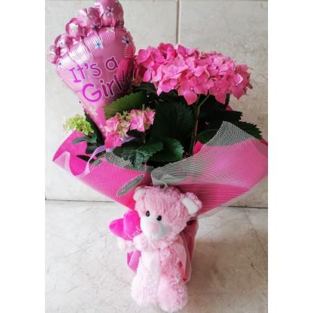 Ορτανσία σε ροζ χρώμα